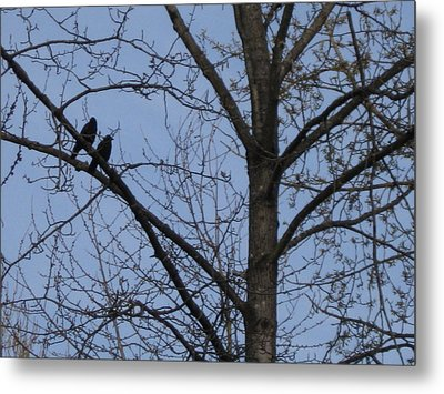 Two Crows Metal Print by AJ Brown