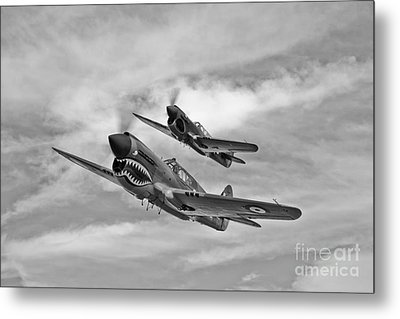 Two Curtiss P-40 Warhawks In Flight Metal Print by Scott Germain