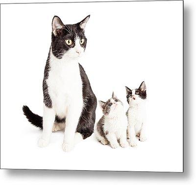 Two Cute Kittens Looking Up At Mom Cat Metal Print by Susan Schmitz