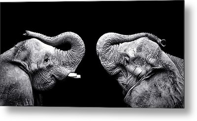 Two Elephants Face To Face Metal Print