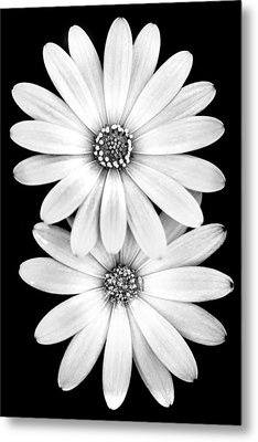 Two Flowers Metal Print by Az Jackson
