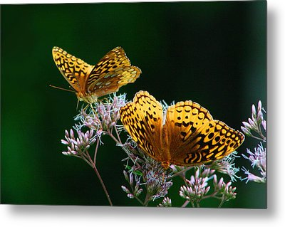Two Fritillaries Metal Print by Kathryn Meyer
