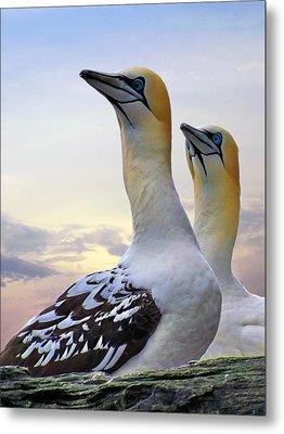 Two Gannets Metal Print