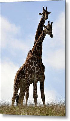 Two Giraffes A Love Story Metal Print