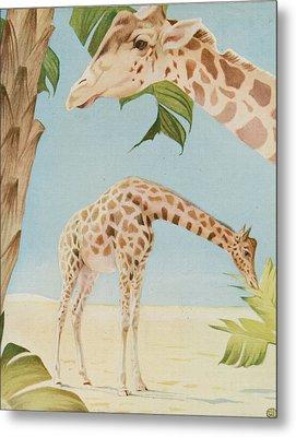 Two Giraffes Metal Print