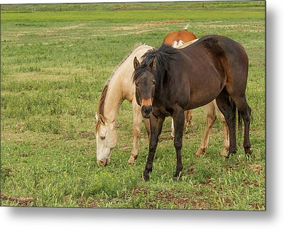 Two Grazing Horses Metal Print by Jean Noren
