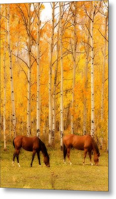 Two Horses In The Autumn Colors Metal Print by James BO  Insogna