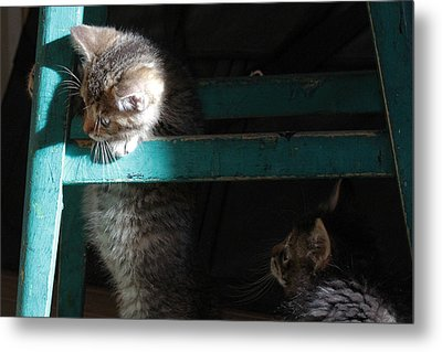 Metal Print featuring the photograph Two Kittens With Turquoise Chair by Doris Potter