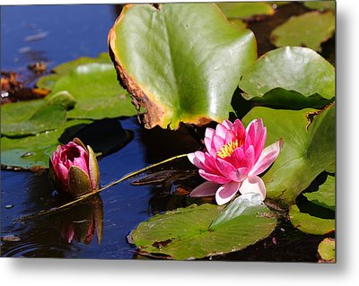 Metal Print featuring the photograph Two Lilies by Richard Patmore