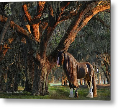 Two Majestic Souls Metal Print by Terry Kirkland Cook