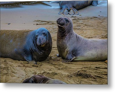 Two Male Elephant Seals Metal Print by Garry Gay