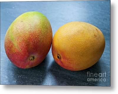 Two Mangos Metal Print by Elena Elisseeva