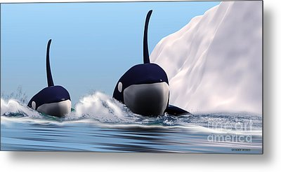 Two Orca Whales Metal Print