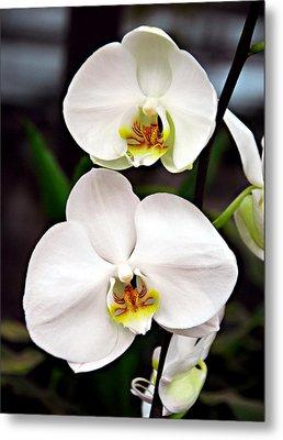 Two Orchids Metal Print by JoAnn Lense