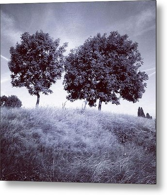 Two Rowans The Cloddies, Nuneaton Metal Print by John Edwards