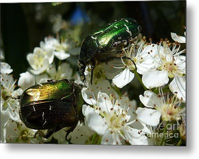 Metal Print featuring the photograph Two Scarabs Metallic Green by Jean Bernard Roussilhe