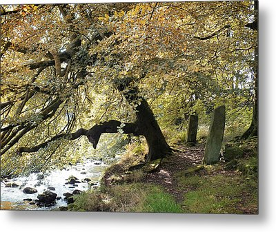Two Standing Stones Beside Hebden Water In Autumn  Metal Print by Philip Openshaw