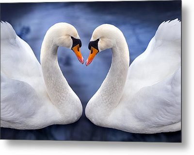 Two Swans Metal Print by Simon Kayne