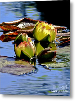 Two Water Lilies Metal Print by Carol F Austin