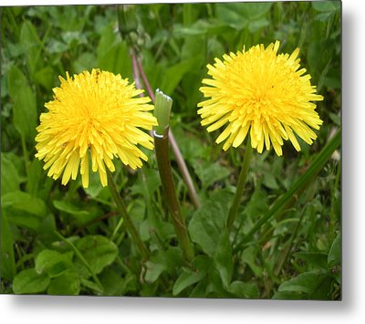 Two Yellow Heads Metal Print