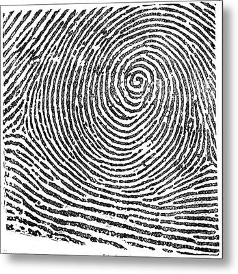 Typical Whorl Pattern In 1900 Metal Print by Science Source