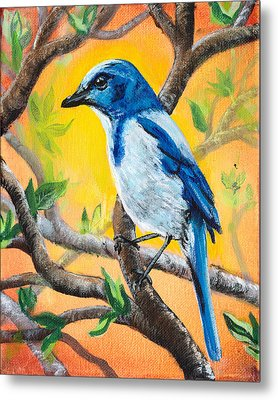 Ultramarine Flycatcher Bird By Gretchen Smith Metal Print by Gretchen  Smith