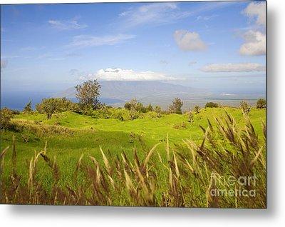 Ulupalakua Landscape Metal Print by Ron Dahlquist - Printscapes