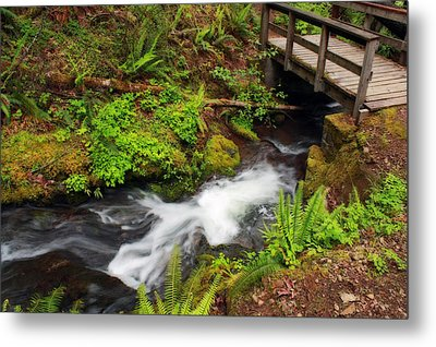 Umpqua Forest Beauty Metal Print
