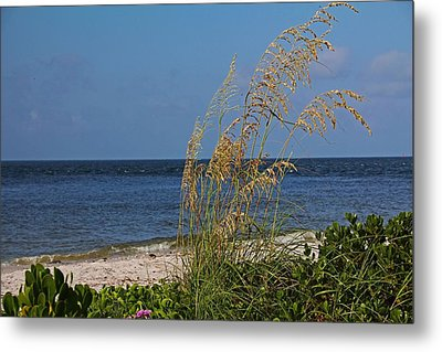 Metal Print featuring the photograph Under A Summer Sky by Michiale Schneider