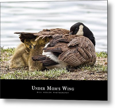 Metal Print featuring the photograph Under Mom's Wing by Bill Kesler