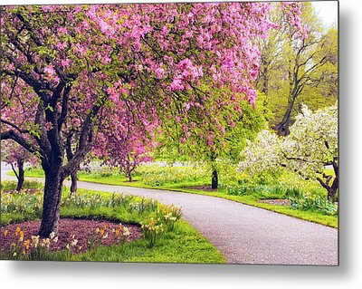 Under The Apple Tree Metal Print by Jessica Jenney