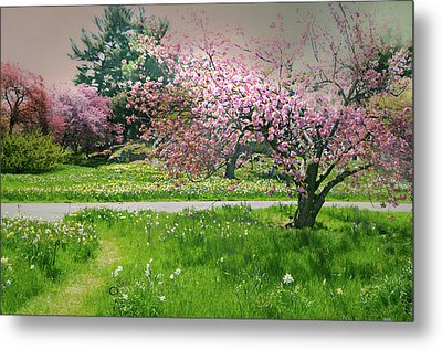 Metal Print featuring the photograph Under The Cherry Tree by Diana Angstadt