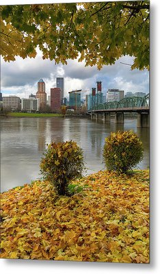 Under The Maple Tree In Portland Oregon During Fall Metal Print