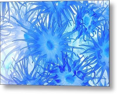 Metal Print featuring the photograph Under The Sea Colorful Watercolor Art #14 by Debra and Dave Vanderlaan