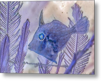 Metal Print featuring the photograph Under The Sea Colorful Watercolor Art #8 by Debra and Dave Vanderlaan