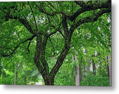 Metal Print featuring the photograph Under The Shade Tree by Tikvah's Hope