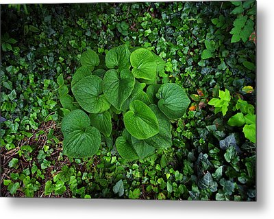 Metal Print featuring the photograph Undergrowth by Anthony Rego