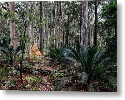 Understorey Metal Print