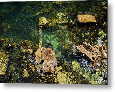 Metal Print featuring the photograph Underwater Art At Cannery Row by Susan Wiedmann