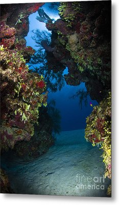 Underwater Crevice Through A Coral Metal Print by Todd Winner