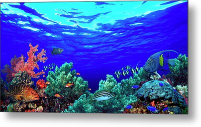 Underwater View Of Pallid Triggerfish Metal Print by Panoramic Images