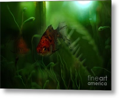 Underwater World Metal Print by Angel  Tarantella