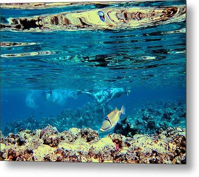 Underwater World. Beautiful Fish. Metal Print