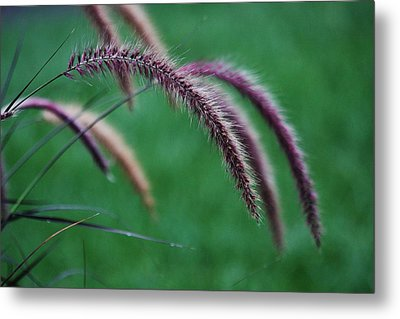Metal Print featuring the photograph Unexpected Sharpness by Vadim Levin