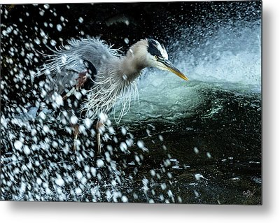 Metal Print featuring the photograph Unfazed Focus by Everet Regal