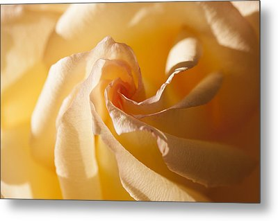 Unfurling Metal Print by Christina Lihani