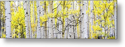 Unititled Aspens No. 6 Metal Print by The Forests Edge Photography - Diane Sandoval