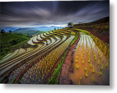 Unseen Rice Field Metal Print by Tetra