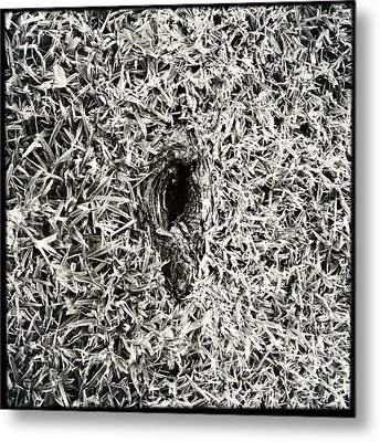 Untitled 20150807 Metal Print by Marco Oliveira