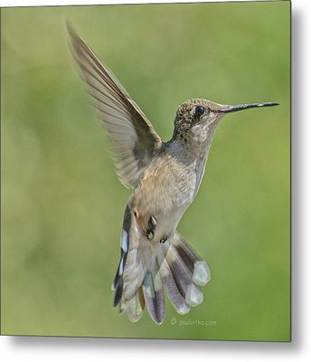 Untitled Hum_bird_four Metal Print